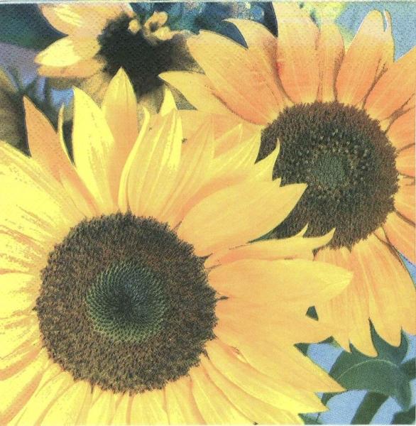 Şerveţel floarea soarelui